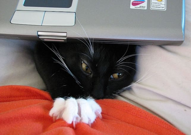 Dell: No, our laptops don't smell like cat urine