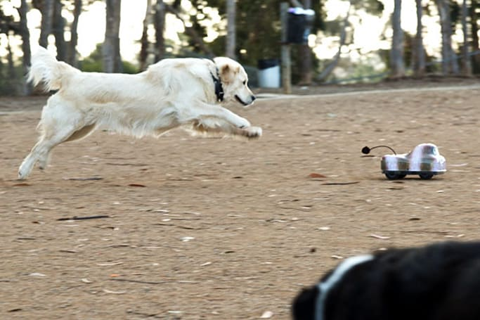 Go-Go Dog Pals lets you exercise Rover without tapping your precious calorie reserve