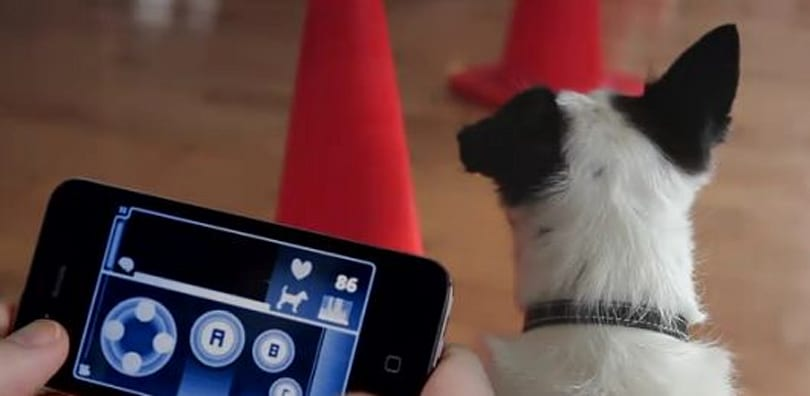 Apple Fools: Gameloft's Pet Pal will let you control your pet via iPhone