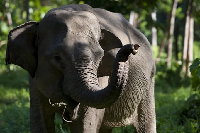 The 'Elephant Listening Project' captures the animal's secret language on film