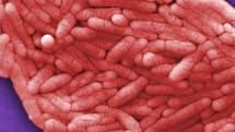 「最悪の脳腫瘍」を遺伝子操作の食中毒菌で叩く方法が開発。実験では生存率が2倍に