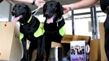 DVD pirates attempt subterfuge in war on crime dogs