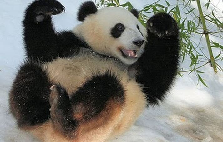 Analysts: Mists of Pandaria sales not so disappointing