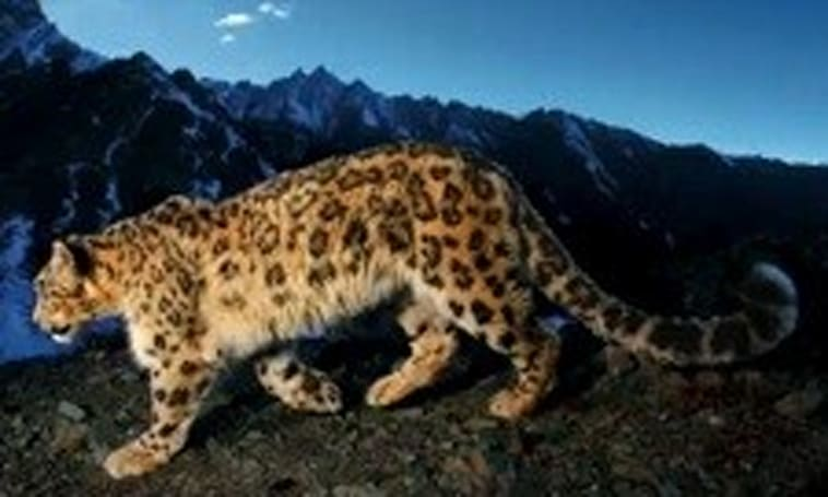 Getting ready for Snow Leopard: Think about your applications