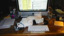Caturday: Le magnifique chat devant l'iMac