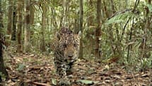Smithsonian captures 201,000 wild photos with automated cameras