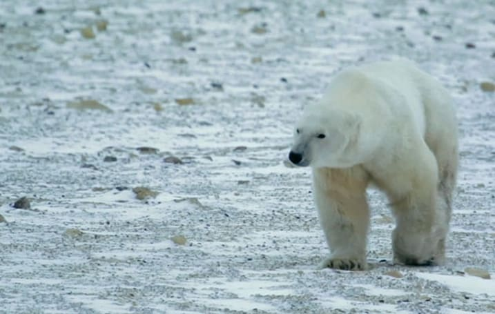 Google adds the 'Polar Bear capital of the world' to Street View