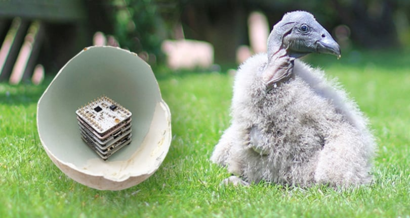 The 3D-printed eggs that could save vultures from extinction