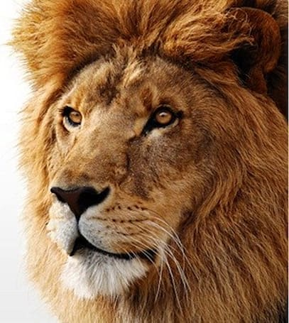10.7 Lion upgrades expected to come via Mac App Store