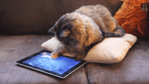 Adorable cat goes fishing with his iPad
