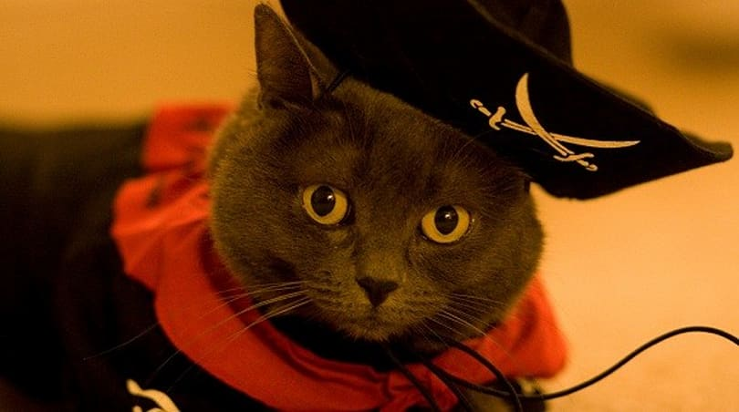 Breakfast Topic: Do you participate in Pirates' Day?