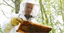 German airports use honeybees to test air quality