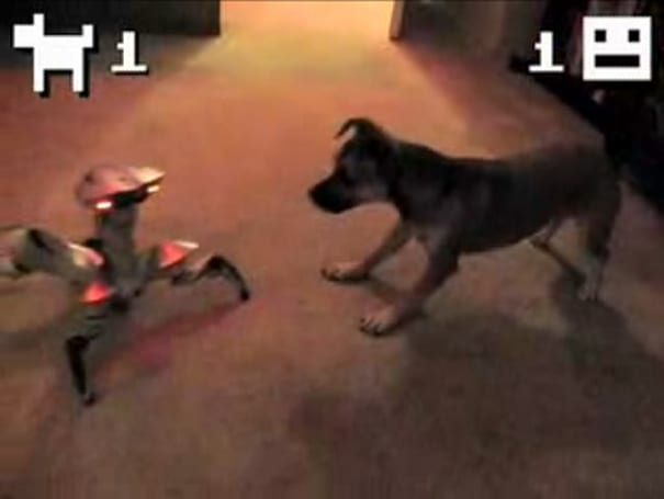 Puppy vs. Roboquad: the ultimate man-machine showdown