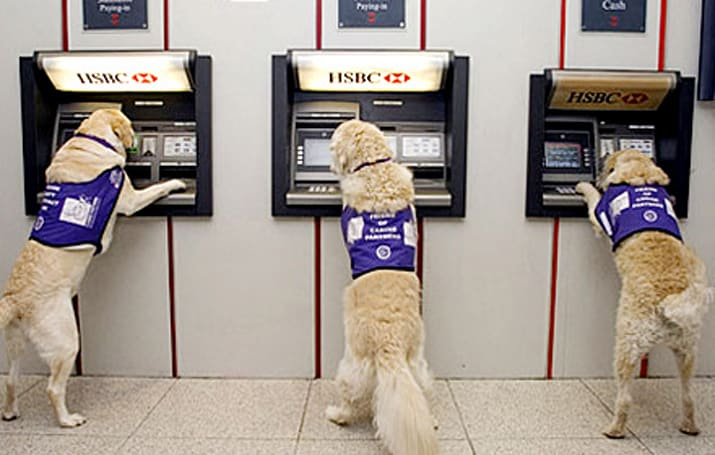 "Assistance dogs relieve ""ruff"" times at the ATM"