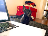 Dog Days of Summer: Stop coding and pay attention to ME