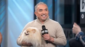 """Cesar Millan Talks About What Lessons Can Be Learned From His Book, """"Cesar Millan's Lessons From The Pack"""""""