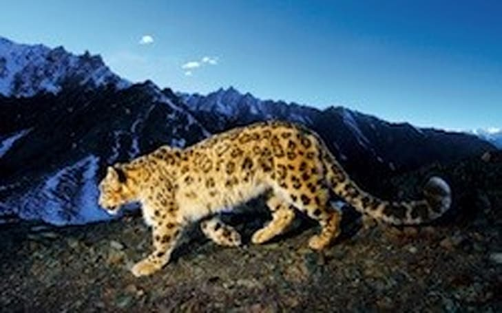 Critical security warning issued for Mac OS X 10.5 Leopard