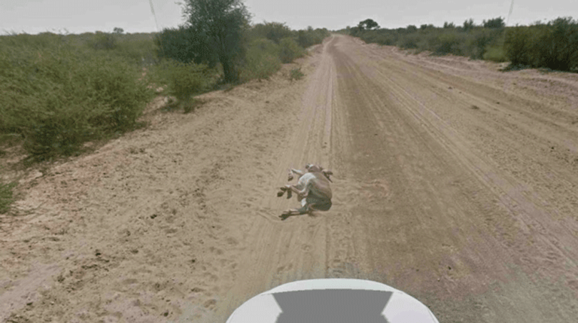 Google: it's cool, guys, we didn't run over a donkey