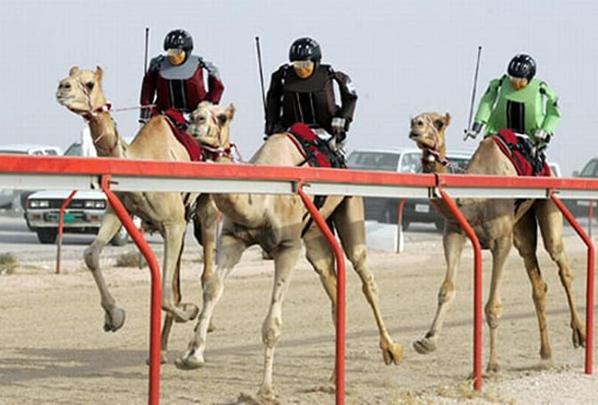 Robot camel jockeys found packing illegal stun guns, Dubai police say 'Don't tase them bro!'