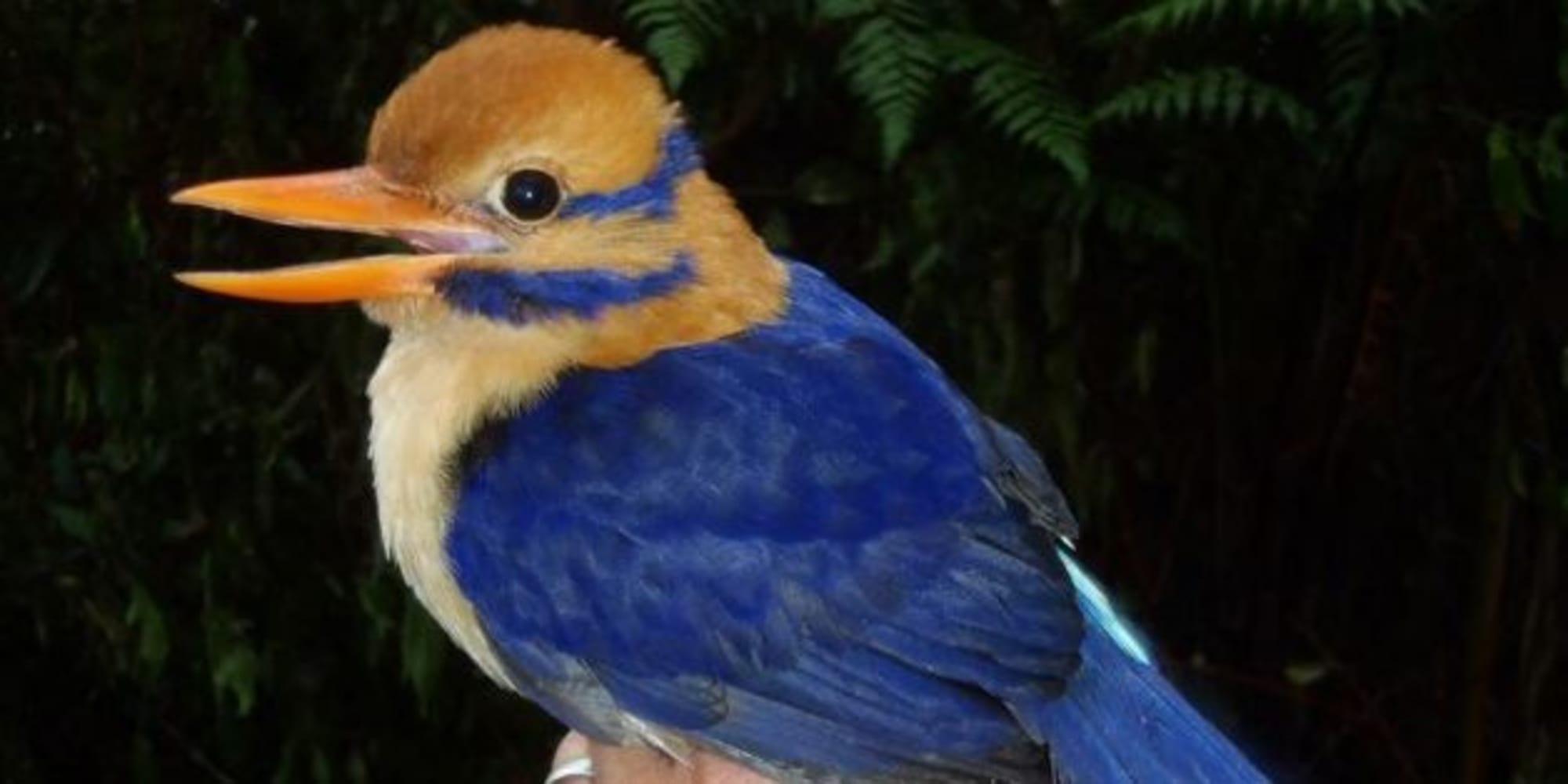 Oiseau Martine 11/01/2016 trouvé par Ajonc ?url=http%3A%2F%2Fi.huffpost.com%2Fgen%2F3460762%2Fimages%2Fn-MARTINCHASSEUR-628x314