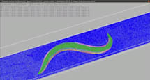 Digitally simulated worm wriggles for the first time (video)