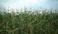 Monsanto pushes Big Data-driven planting but farmers are skeptical