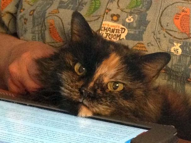 Caturday: Ruby, the Internet-famous cat