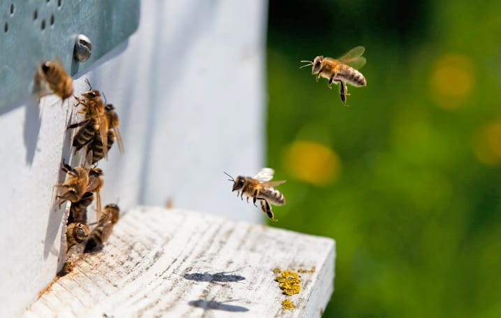 A common crop pesticide is making bees dumb