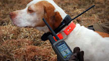 Garmin DC 30 GPS dog collar turns hunting into a videogame