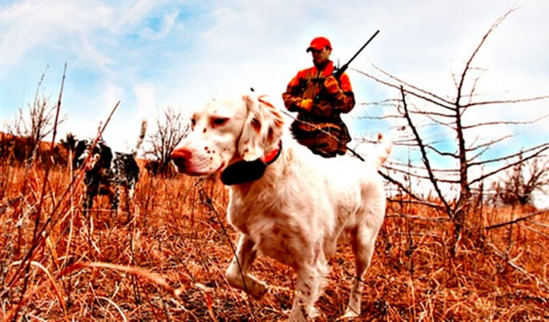 Garmin's Astro 320 GPS handheld offers nine-mile coverage, keeps your hunting dogs in line