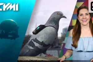 ICYMI: Sea Drones, Pigeon Pollution Patrol and More