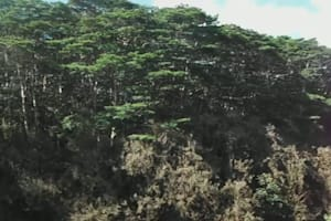 Fujifilm Finepix XP30 HD Video Sample - Rainbow Falls in Hilo, Hawaii