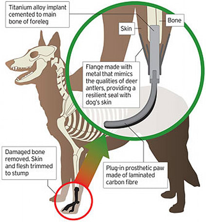 UK canine equipped with prosthetic paw