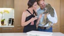 WiFi 猫トイレ兼 体重計Tailioが出資募集中。測定データをクラウド管理、アプリに警告