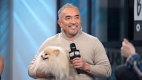 Cesar Millan Talks About What Lessons Can Be Learned From His Book,