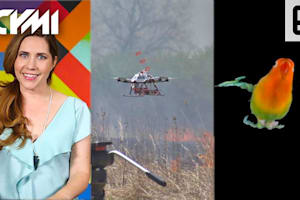 ICYMI: Fire Starting Drone, Stanford Bird Studies and More