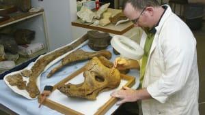 Scientists Make Groundbreaking Dinosaur Discovery