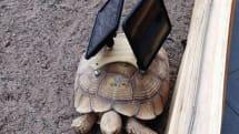 It's 'art' -- tortoises with back-mounted iPads