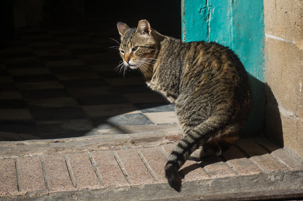 Mystery over Spanish cat found 2,000 miles from Canaries ...