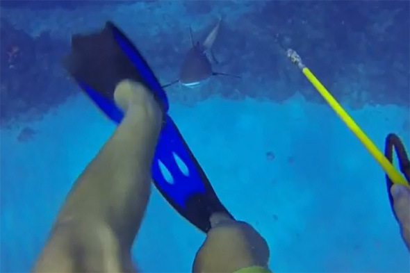 Diver fends off shark in Caribbean (video)
