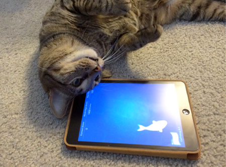 cat and ipad
