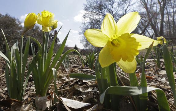 Spring Flowers Ohio
