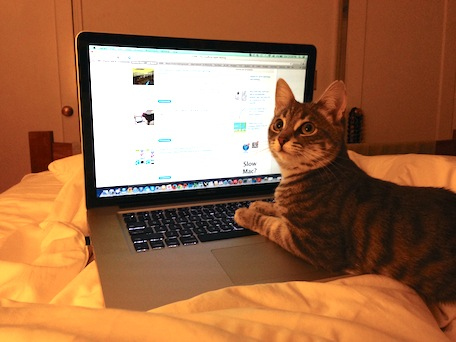 cat, caturday, macbook, feral cat, feral cat rescue