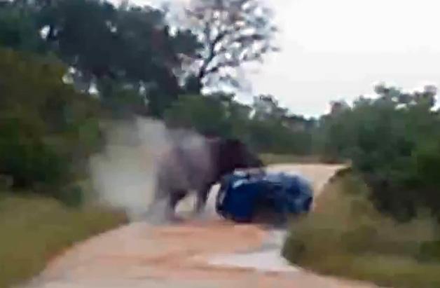 【ビデオ】象がフォルクスワーゲンを襲う!
