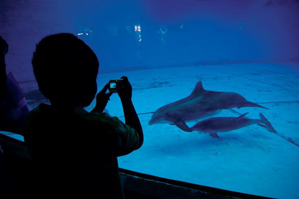 baltimore aquarium dolphins