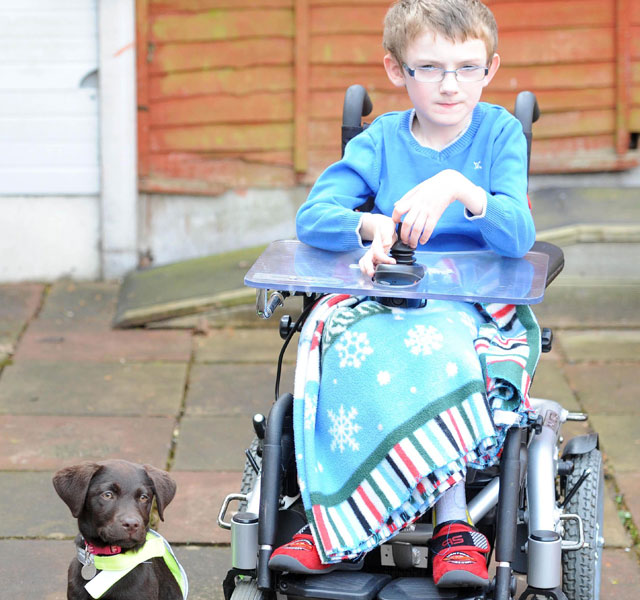Labrador puppy transforms disabled boy's life