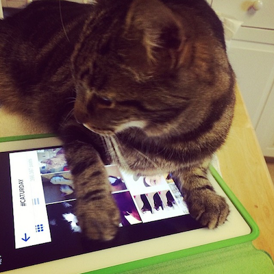 Cat on an iPad, looking at pictures of cats