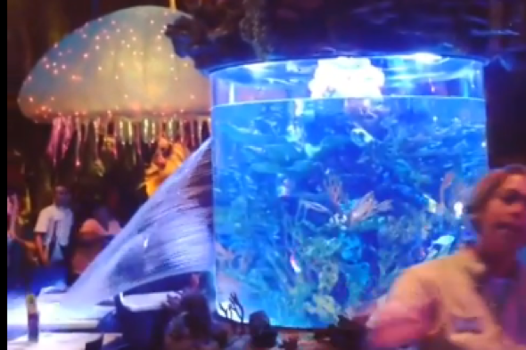 Fish tank games rugby fish tank bursts open at disney for Travel fish tank