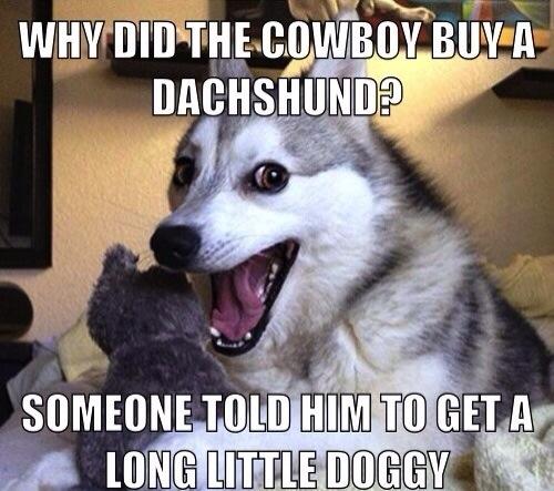 the best worst jokes from pun husky   craveonline