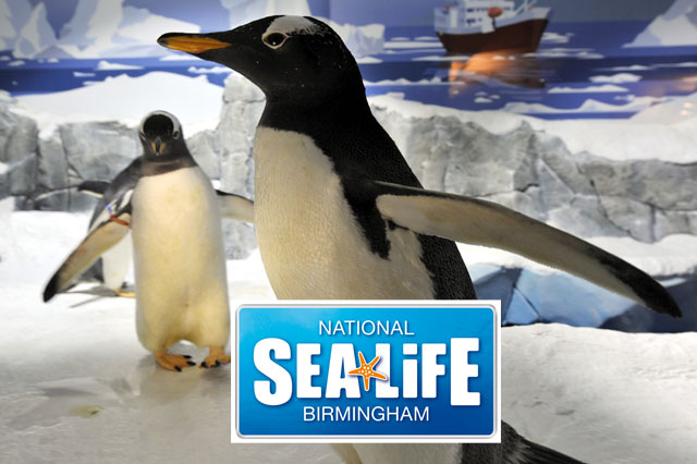 Win a trip to the National SEA LIFE Centre Birmingham